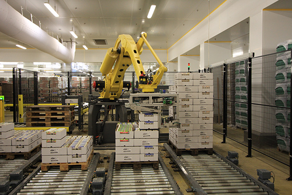 Robotic palletization